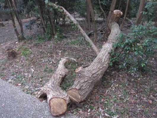 伐採林.jpg