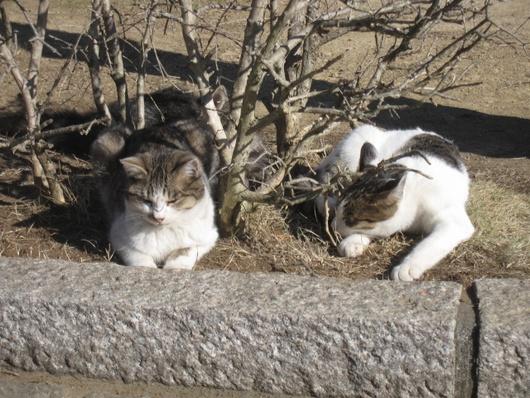 猫たち.jpg