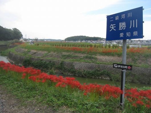 矢勝川.jpg