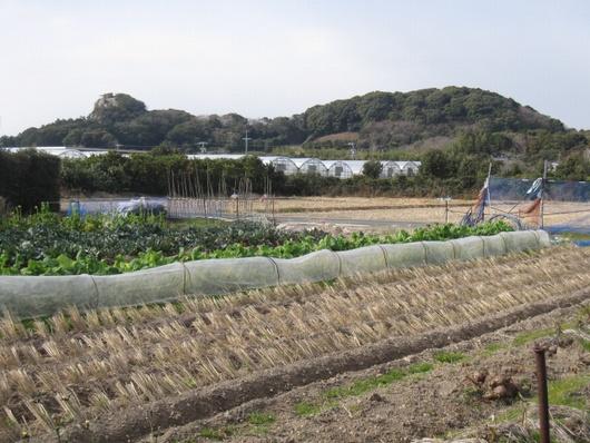 野菜畑.jpg